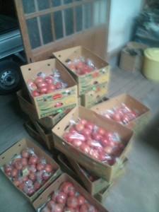 富津産トマト
