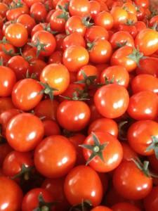 ミニトマトさくら